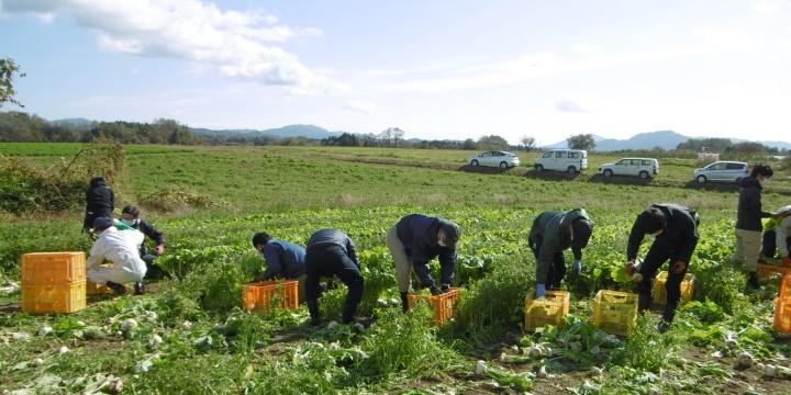 農作業体験(収穫作業)